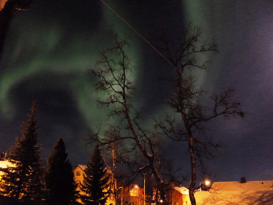 Northern lights from the garden